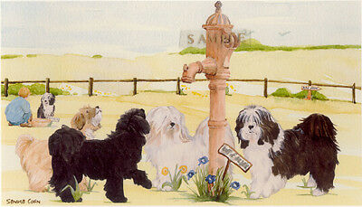 Lhasa Apso Print: Off To The Dog Show by UK Artist Sandra Coen