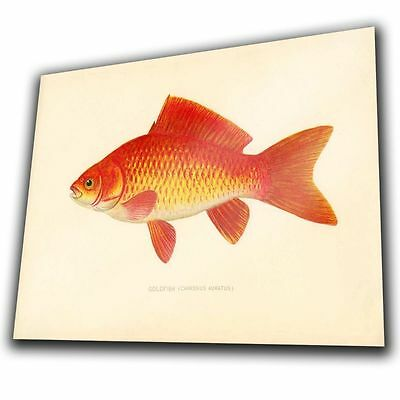 Vintage Goldfish METAL SIGN WALL PLAQUE poster print art picture hanging