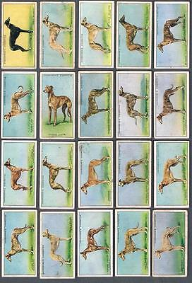 1934 Churchman Racing Greyhounds Tobacco Cards Complete Set of 50