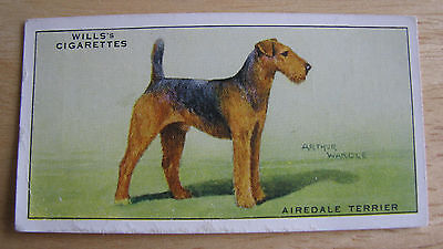 0929 Vintage Airedale Terrier Will's Cigarette Card #37 (Arthur Wardle)