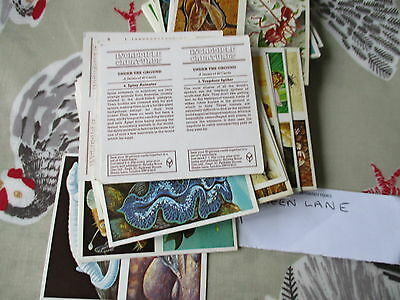 Brooke Bond**incredible Creatures**52  Double Cards(Walton-On-Thames)