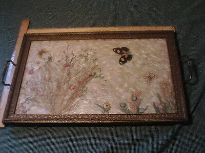 Vintage Serving TRAY PICTURE HORTICULTURE FLOWERS BUTTERFLIES