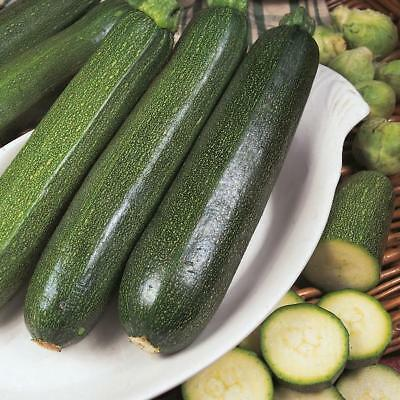 Pack Vegetable Seeds Courgette 'All Green Bush' Kings Quality Seed