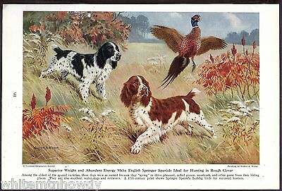 1947 ENGLISH SPRINGER SPANIEL Vintage Dog Print Page Walter Weber Art