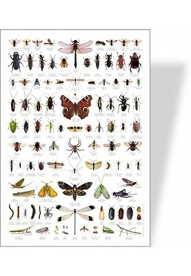 poster nature insectes