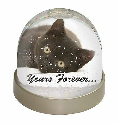 AC-130GL White Cat /'Yours Forever/' Photo Snow Globe Waterball Stocking Filler G