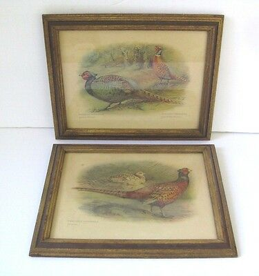 Pair Of Late 19th Century Framed  Art Prints Of Pheasants  By Charles Whymper