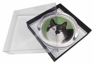 Black and White Cats Face Glass Paperweight in Gift Box Christmas Pres, AC-198PW