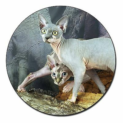 Sphynx Cat Fridge Magnet Stocking Filler Christmas Gift, AC-24FM