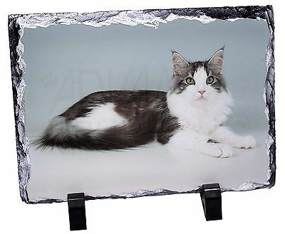 AC-17SL Red Maine Coon Cat Photo Slate Christmas Gift Ornament