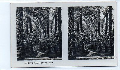 #15 A Date Palm Grove, Java - Peeps Into Many Lands XL Stereoscopic Card