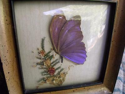 Beautiful Vintage Framed Genuine Butterfly Art Wall Hanging Purple & Blue