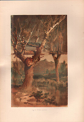 """1881 COLOR CHROMOLITH """"Tree Burial"""" BURIAL CUSTOMS OF NATIVE AMERICAN INDIANS"""