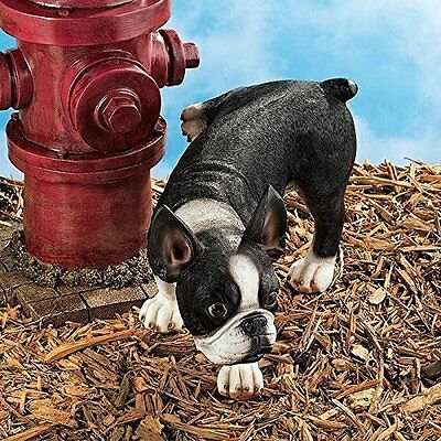 Design Toscano Lifting a Leg Naughty Boston Terrier Dog Statue Brand New!