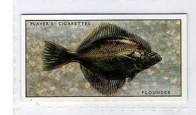 #19 Flounder - Fresh-Water Fishes - 1933/1934 Card