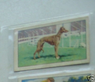 #20 Queen of the suir greyhound - Sport cigarette card