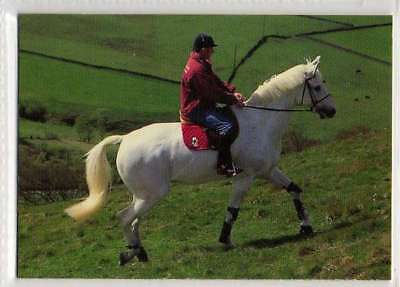 #3 Milton Famous Show jumping equestrian collector card