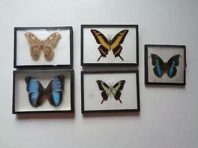 Lot Of 5 Real Framed Butterfly Collection From Peru Africa Brazil Texas