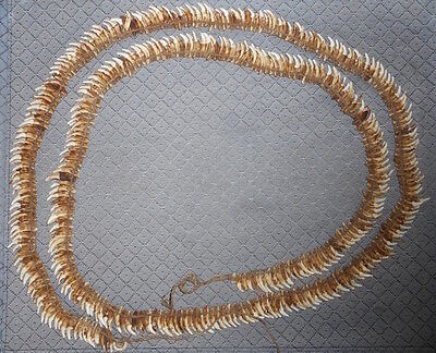 Large Old Dog Tooth Tribal Necklace Papua New Guinea Oceanic RARE