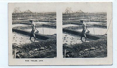 #9 Irrigated Rice Fields, Java - Peeps Into Many Lands XL Stereoscopic Card
