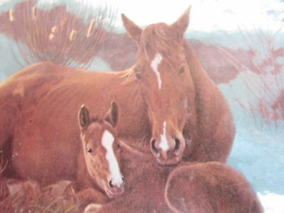 American Quarter Horse Journal LOT Equestrian Race Rodeo Horse Lover Vintage