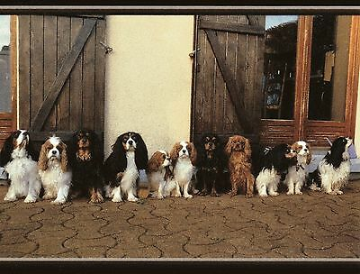 The Reunion Cavalier King Charles Spaniel blank note card