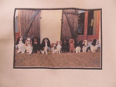 Reunion light weight Shopping Tote Cavalier King Charles Spaniel