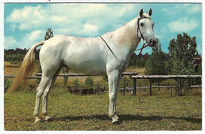 o animals horse animal postcard