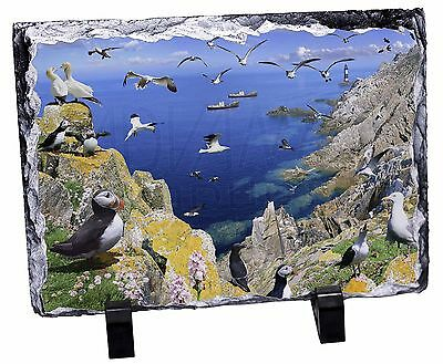 Puffins and Sea Bird Montage Photo Slate Christmas Gift Ornament, AB-93SL