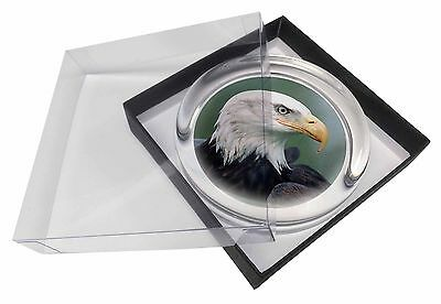 Eagle, Bird of Prey Glass Paperweight in Gift Box Christmas Present, AB-E6PW