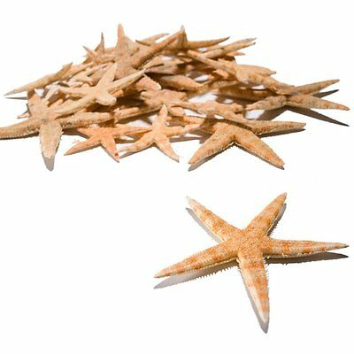 "Real Starfish Star Fish Decorations (30 Pieces) 1/2"" - 3"""