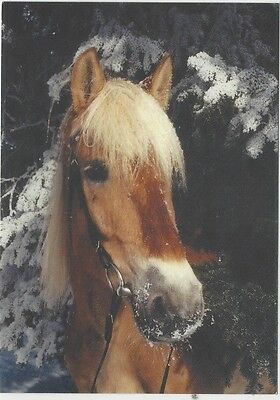 Horse Postcard -Chestnut with Chrome in snow