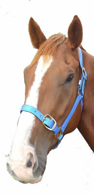 PVC Halter/headstall with brass fittings - Royal Blue