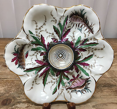 Porcelain Oyster Plate 6 Well Antique Hand Painted Shells Gold Trim Wear 64 HELP