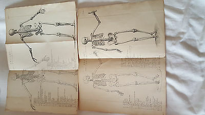 Old Medical Book Plates Showing Anatomy Of Various Muscles-Bones Etc