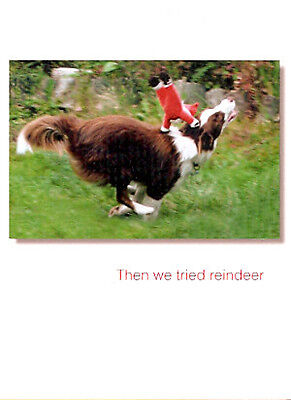 Border Collie Merle Christmas Cards - Box of 12