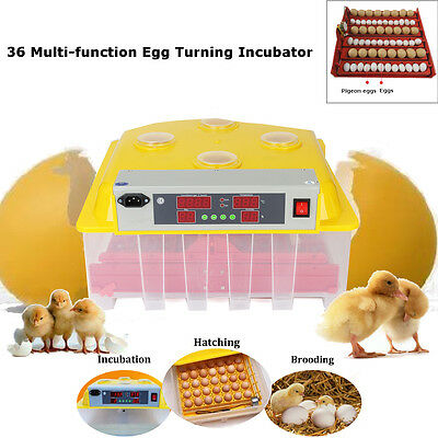 36Clear Egg Automatic Incubator Hatching Digital Egg Turning Temperature Control