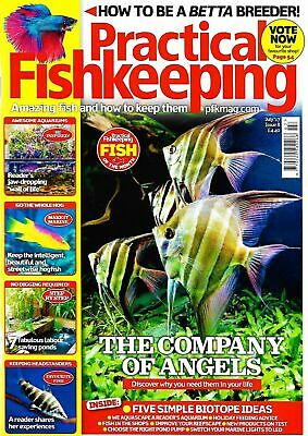 Practical Fishkeeping Magazine July 2017 Issue 8 Betta Angels PFK Tropical Fish