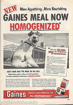 1951 WIRE FOX TERRIER~Vintage Gaines Meal Dog Food AD