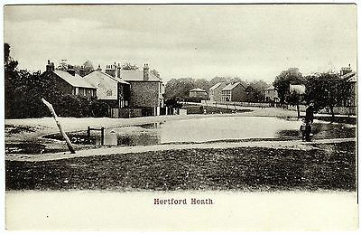 Postcard Man With Small Boy By Pond-Ducks & Green-Houses-Hertford Heath Village