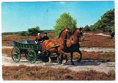 Holland Postcard Beekbergen Horses and Wagon Countryside