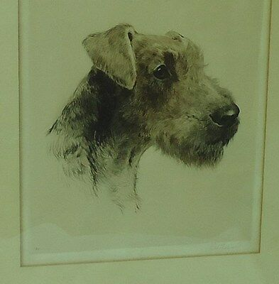 Airedale Irish Lakeland Welsh Terrier Etching Eberhardt Germany 10X11""