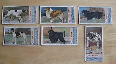 "1222 Lot of 6 Vintage ""Dog Series"" Cigarette Cards Imperial Tobacco of Canada"
