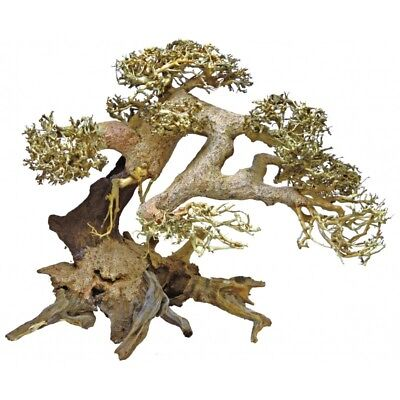 SuperFish Bonsai Trees Wood DriftWood Aquarium - Hand Picked / Shaped - 3 Sizes