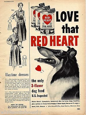 1951 COLLIE Expression of Anticipation Red Heart Dog Food Vintage Print AD