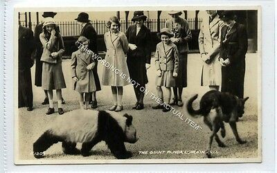(Ld8402-475) RP, H.R.H Princess Elizabeth & The Giant Pand London Zoo, Used VG
