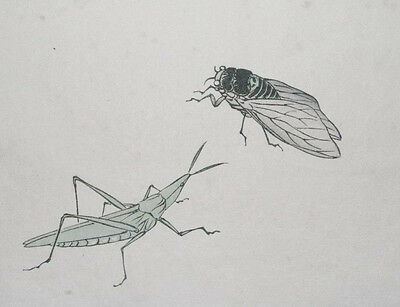 CICADA & CRICKET INSECTS : ORIGINAL OLD 1897 Japanese Woodblock Print