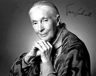 Jane Goodall signed 8x10 photo / autograph
