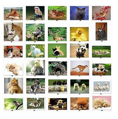 Personalized Return Address labels Cute Animal Pictures Buy 3 get1 free {c2}