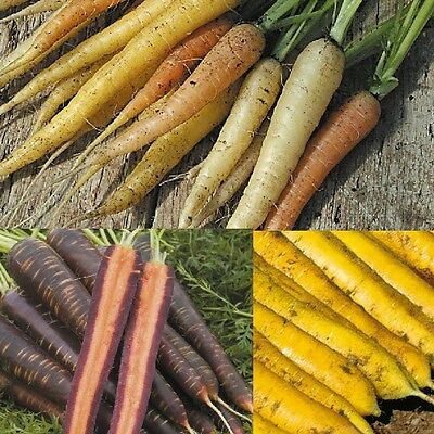 Vegetable - Carrot - Mixed - 250 Seeds